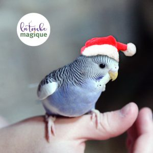 De kerstparkiet - kerstpakket voorzien van een boodschap - La Touche Magique